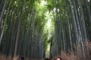 Approach to the Bamboo Forest